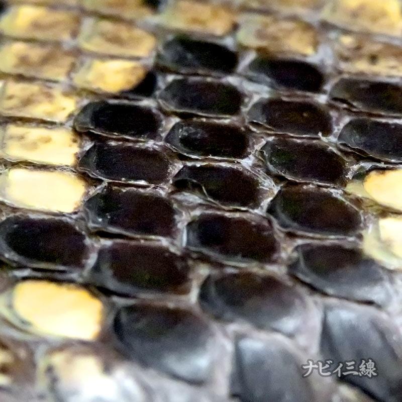 蛇皮ウロコアップ